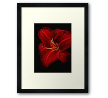Red Day Lily on Black Framed Print