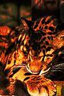 Clouded Leopard sleeping by buttonpresser