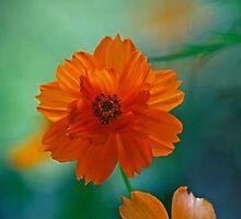 Orange Rising by Eileen McVey