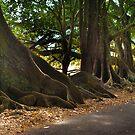 Lonely Road - Norfolk Island by Bart Reardon