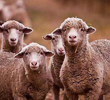 Hay Ewe! by Michelle  Wrighton