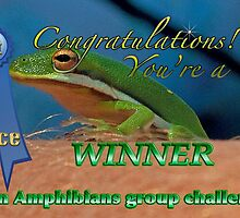 Amphibians Group 1st place Banner Challenge by imagetj