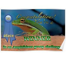 Amphibians Group 1st place Banner Challenge Poster
