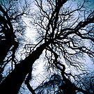 Tree by trbrg