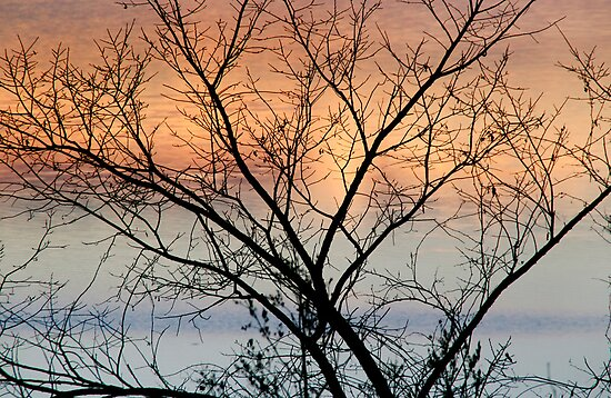 Tree at Sunrise - Ottawa River by Debbie Pinard