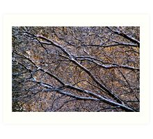 After the Freezing Rain (Featured in the Ottawa Citizen) Art Print