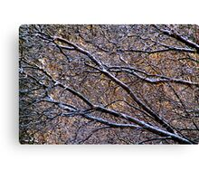 After the Freezing Rain (Featured in the Ottawa Citizen) Canvas Print
