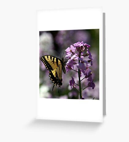 Shades of Summer Greeting Card