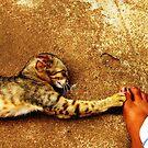 Reaching Out by Akash Puthraya
