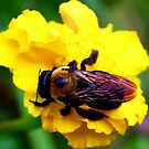Bee by Patricia Motley