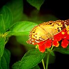 Moth on Lantana by Patricia Motley