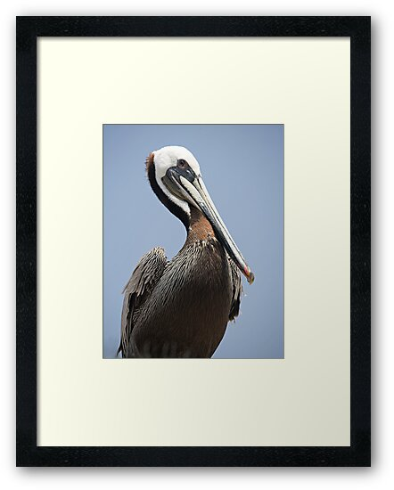Brown Pelican by Michael  Moss