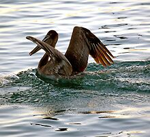 Brown Pelican Sunset Landing by Michael  Moss