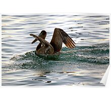 Brown Pelican Sunset Landing Poster