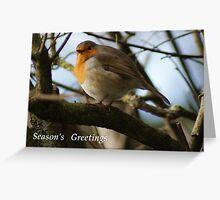 Season's Greetings ~ Robin ~ Greeting Card