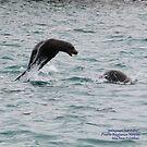 Galapagos Sea Lions (Galapagos Calendar #12) by mgeritz