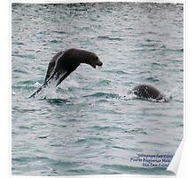 Galapagos Sea Lions (Galapagos Calendar #12) Poster