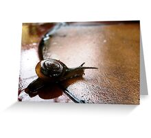 Coil Back Greeting Card