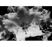 big sunny rhododendron blossom Photographic Print