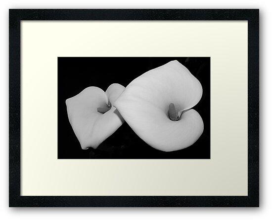 calla lily pair by dedmanshootn