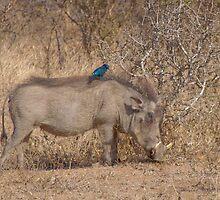 The Warthog and the bird by Sara Friedman