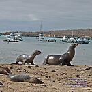 Galapagos Sea Lions (Galapagos Calendar #5) by mgeritz