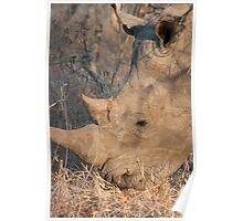 The Horned Beast Poster