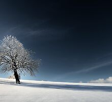 Bleu comme Neige by Philippe Sainte-Laudy