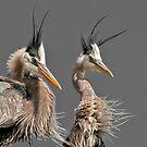 Heron Car Wash by Bill Maynard