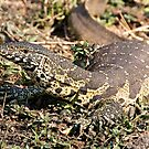 Nile Water Monitor by Michael  Moss
