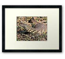 Nile Water Monitor Framed Print
