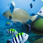 Swarmed by fish on deco by Matt-Dowse