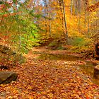 Fall in Cuyahoga Valley National Park by antonalbert1