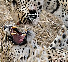 Leopard Mom And Son by Michael  Moss