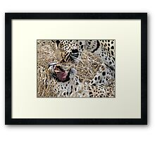 Leopard Mom And Son Framed Print