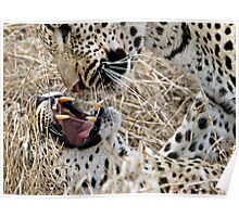 Leopard Mom And Son Poster