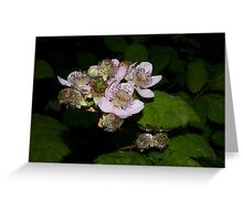 delicate blackberry flowers Greeting Card