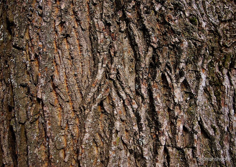 rough bark macro by dedmanshootn