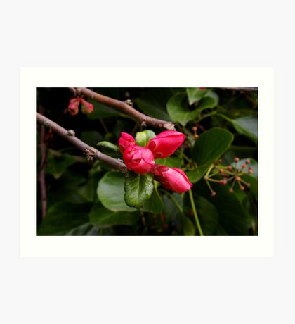 bright pink buds Art Print