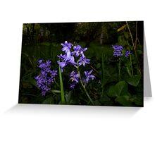 beautiful spotlit bluebells Greeting Card