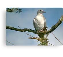 Partridge in a pear tree! Canvas Print