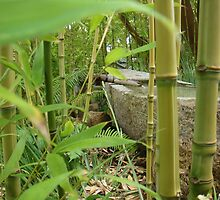 Bamboo Fountain by baglesscat