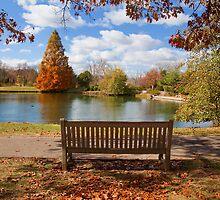 Cox arboretum by antonalbert1