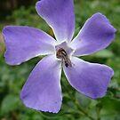 Purple Flower Invasion by baglesscat