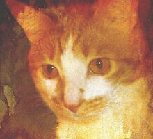 Painted Portrait of Our Ginger Cat, Molly by Marie Sharp