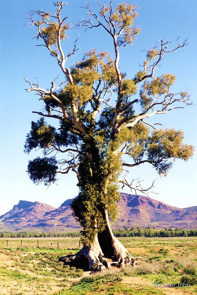 The Spirit of Endurance, The Cazneaux Tree by Michael John