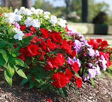 flowers in Twinsburg by antonalbert1