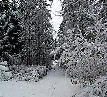 A Winter Trail by Jann Ashworth