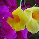 Yellow is beautiful by robert murray