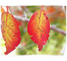 Fabulous Foliage Poster